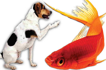 can dogs eat fish, can dogs have fish, raw fish for dogs