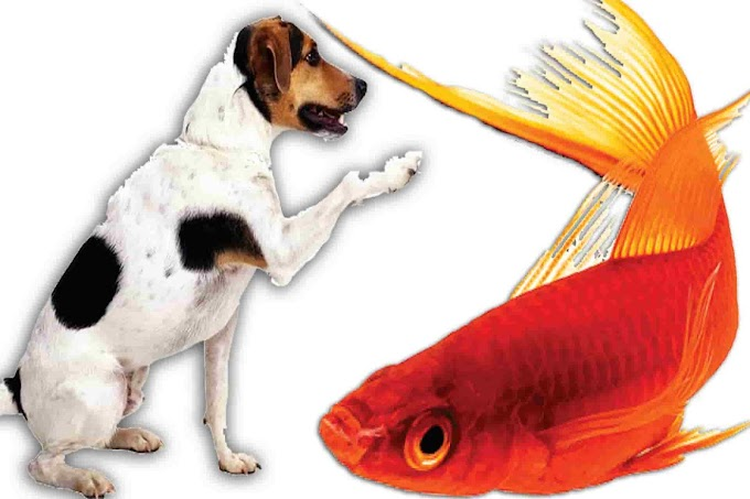 Can Dogs Eat Fish | Is Fish Bad For Dogs