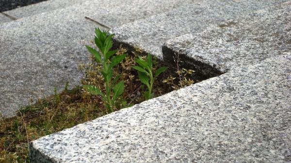 pavimento esterno-pavimento-granito