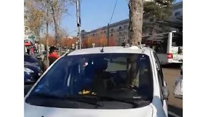 Pohon menancap di daam mobil