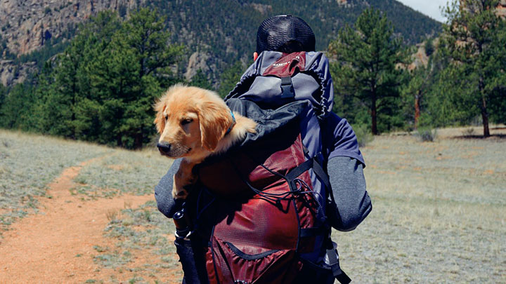 hiking-with-your-dog