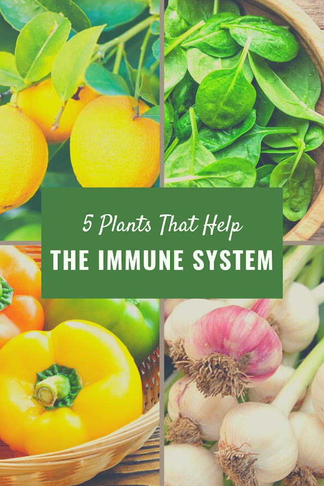 5 Plants That Help The Immune System