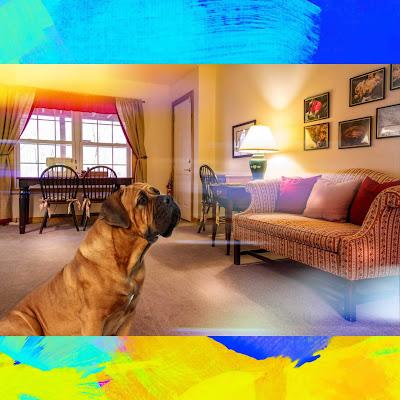 descargar imagenes de perros, imágenes de los perros, imagenes bonitas de perros, buenos dias con perros, buenas noches con perritos