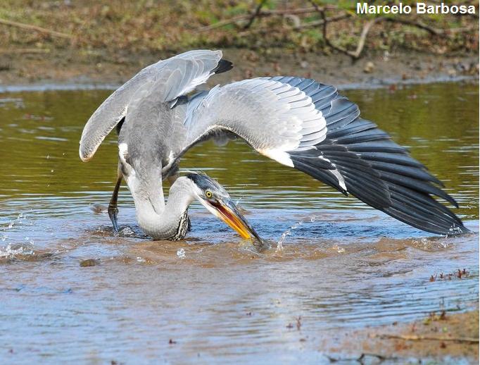 conheça as 5 maiores aves do brasil natureza e conservação