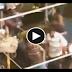 Cop disperse the crowed in alanganallur , Police disperse against jallikattu protest  alanganallur in madurai | TAMIL NEWS