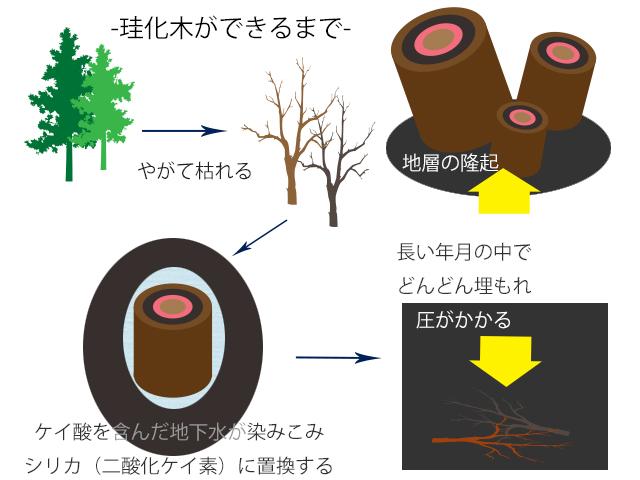 珪化木ができるまで