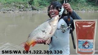 Umpan Ikan Mas Yang Ampuh