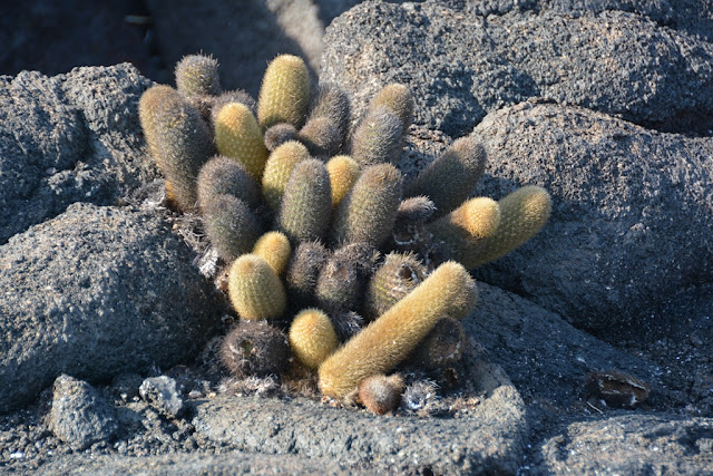 Espinoza Point cactus