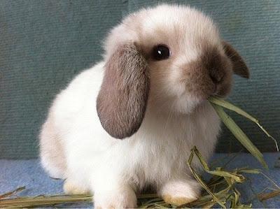 Imagen de tierno conejito bebe comiendo