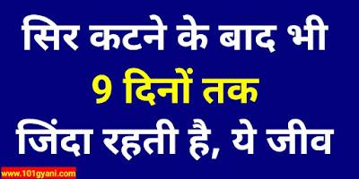 interesting Facts in Hindi, rochak jankariya, interesting swal,