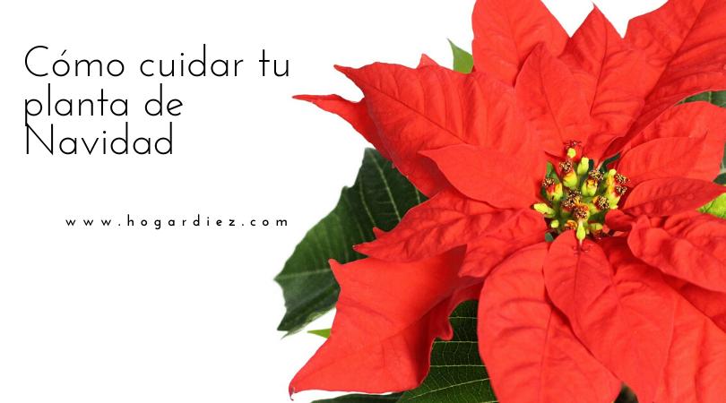Cómo cuidar tu planta de Navidad