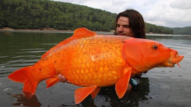 Umpan Buatan Memancing Ikan Mas