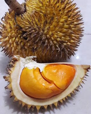 pampakin,durian khas kalimantan