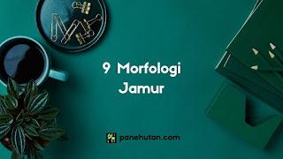 9 Morfologi Jamur