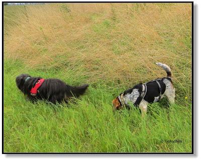 Hundeblog über zwei Hunde