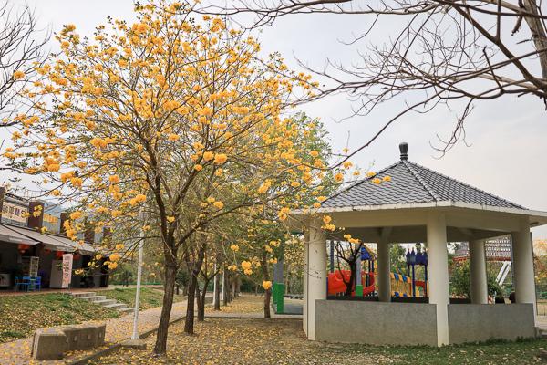 南投草屯南開科大黃花風鈴木步道開滿黃花的隧道好好拍,順遊兒童樂園