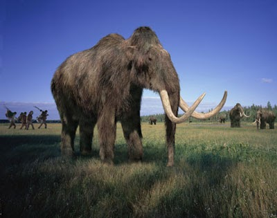 Woolly Mammoth   Endangered Animals Facts, Wildlife ...