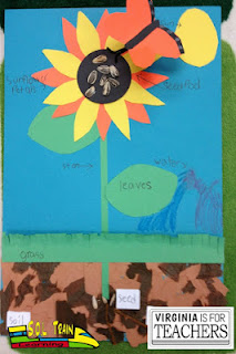 Spring is here! Check out this craftivity to use with your plant studies unit.