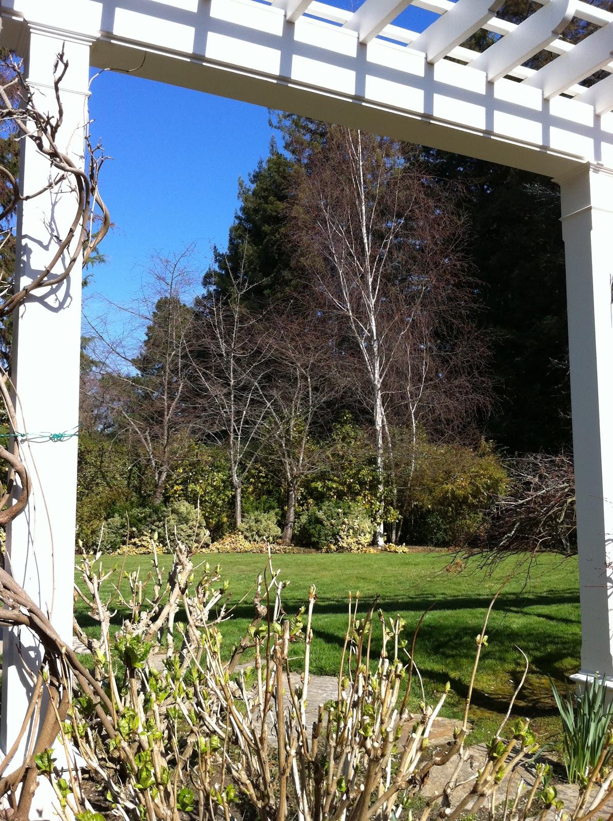 Return To Home: Winter Garden In Northern California