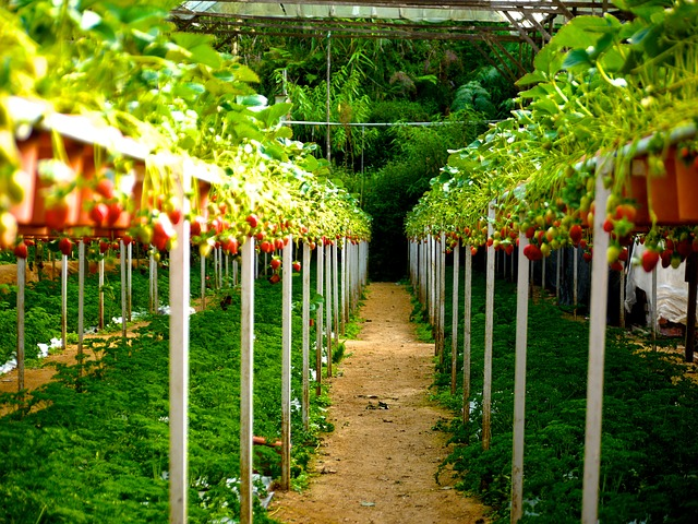 What Is Plantation Farming In Hindi