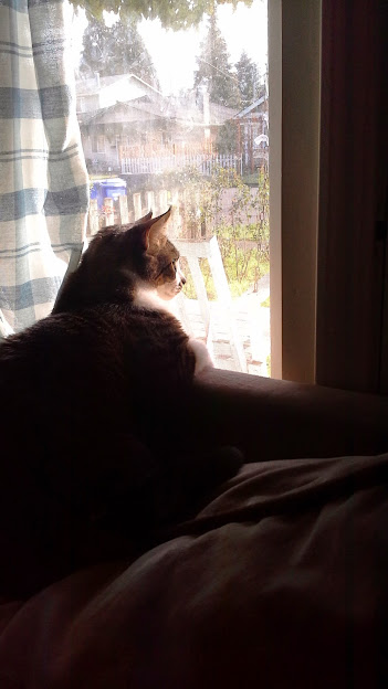 My buddy Silas, a few years ago, looking out across the street upon the house I'm about to move into. Ahh, peace and quiet in Happy Rock once again.