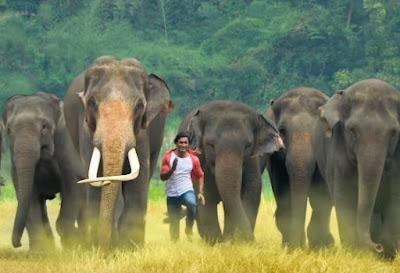 Junglee, Junglee Dialogues, Junglee Best Dialogues, Junglee Vidyut Dialogues