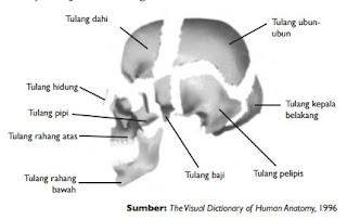 Tulang-tulang penyusun tengkorak kepala