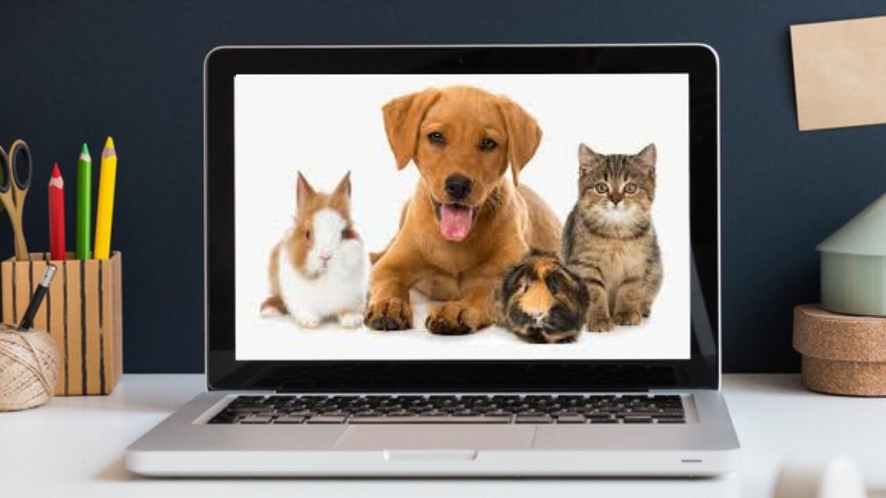 como-monetizar-blog-de-mascotas
