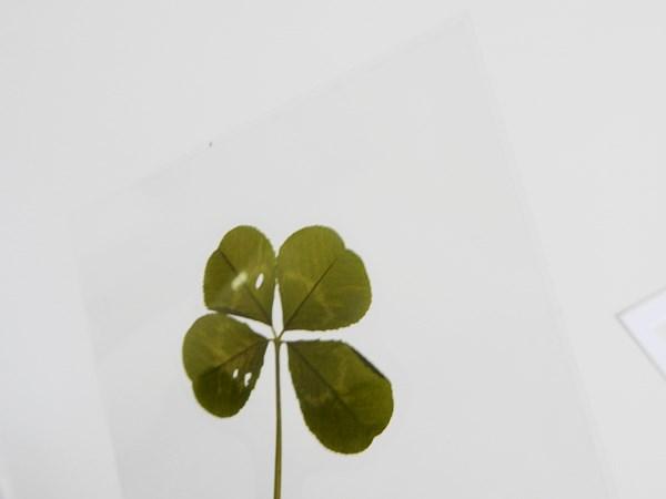 DIY : marque page végétal