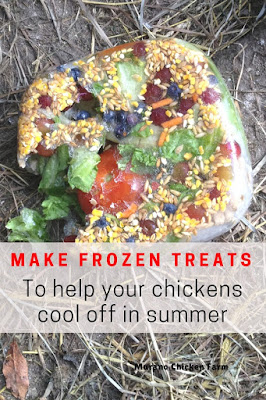 Summer treat for chickens
