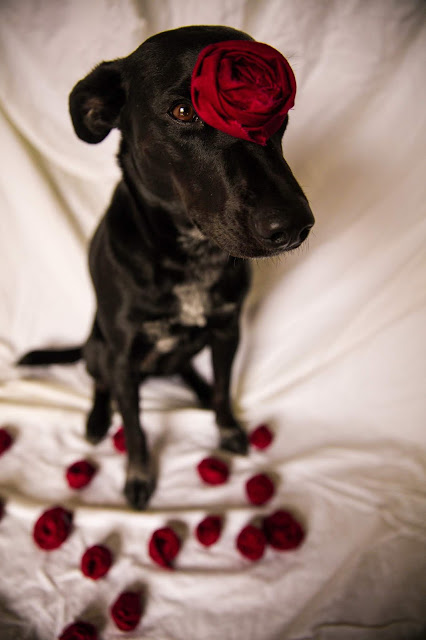 Celebrate this Valentine's day with your pup.