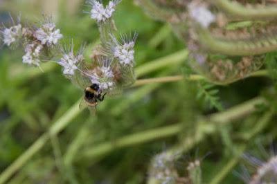 bot-sineğinden-nasil-kurtulunur