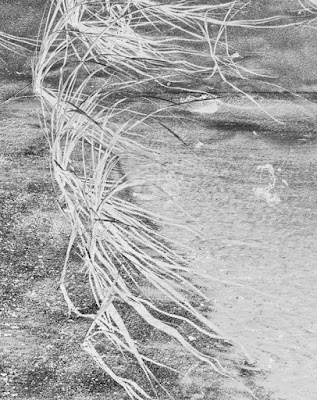 Windswept by Sara Harley