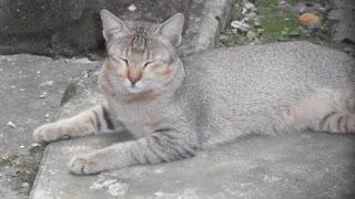 Cute cat closed eyes