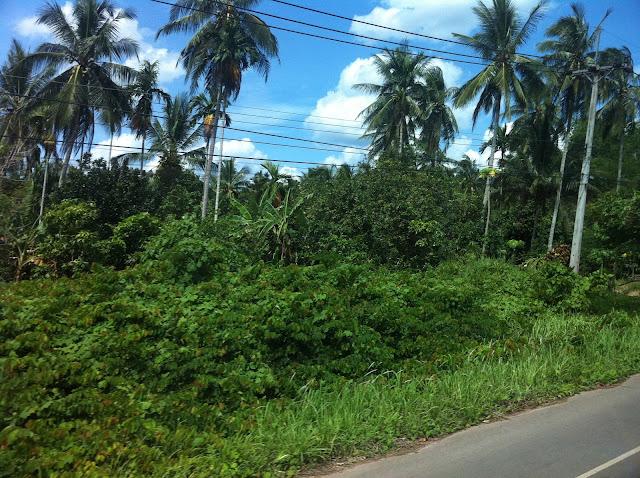 Plena jungla