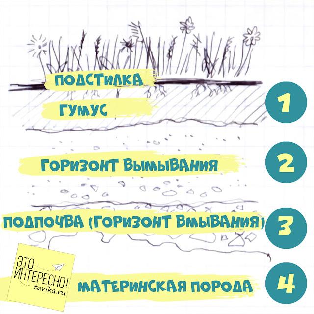 схема почвенных горизонтов для детей