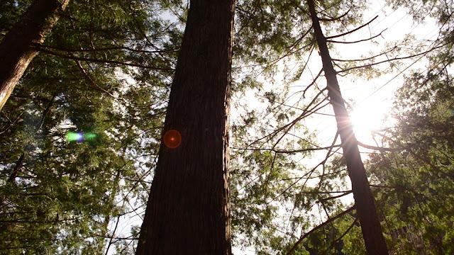 木曽桧の森