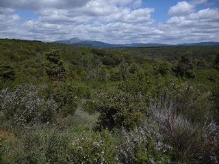 Vistas del Pico Ocejón