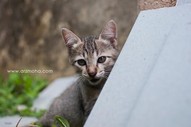anak kucing comel yang hilang, cute kitten, gambar anak kucing comel,