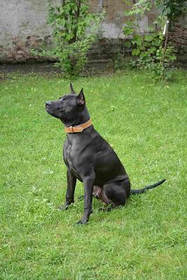 Asian dog breeds, Cute asian