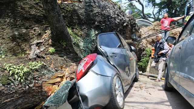 Trembesi Raksasa di Pusat Kota Tumbang Timpa Dua Mobil