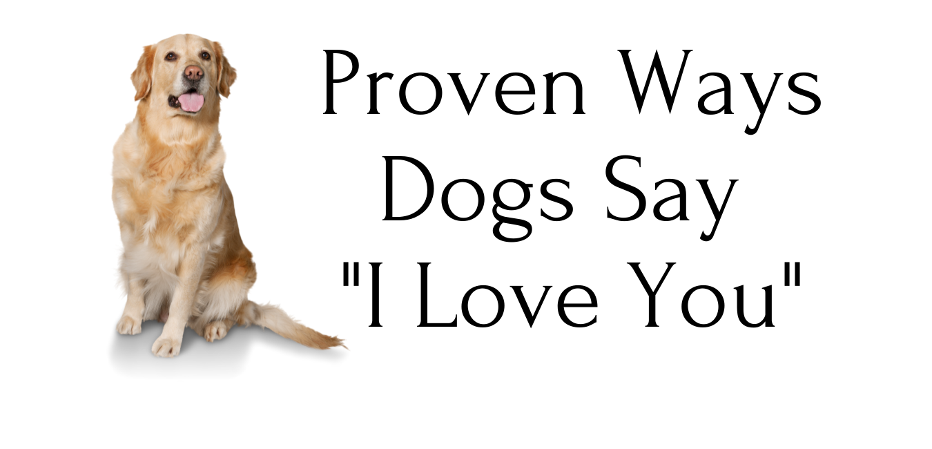 Proven Ways Dogs Say I Love You