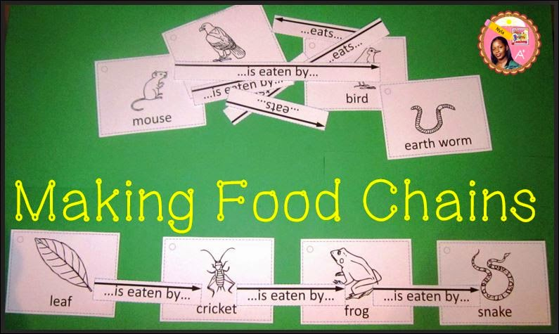 How-to-make-a-food-chain