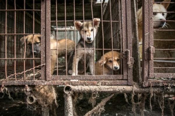Ăn thịt chó mèo: ngày xưa nghèo khổ, thiếu hụt thì có gì ăn nấy, bây giờ văn mình phải khác chứ!
