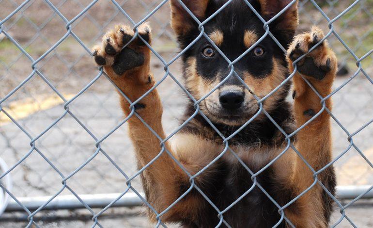 Xρήματα σε δήμους της Λάρισας για τα καταφύγια αδέσποτων ζώων