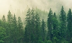 Jenis-jenis pohon yang hidup di lahan gambut biasanya jenis pohon yang memiliki kekhasan tersendri. Selain itu, jenis pohon tersebut memiliki nilai komersial yang tinggi dibandingkan dengan jennis pohon lainnya. Adapun jenis pohon yang dimaksud adalah diantaranya balangeran (Shorea balangeran), bintangur (Callophylum spp), bungur (Logerstroemia speciosa), jelutung rawa (Dyera lowii), kempas (Kompasia malaccensis), meranti rawa (Shorea pauciflora), nyatoh (Palaquium spp), perepat (Combretorcarpus rotundatus), pulai rawa (Alstonia pneumatophora), punak (Tetramerista glabra), ramin (Gonystylus bancanus), rengas (Melanorrhoea walichii), dan terentang (Campnosperma spp).