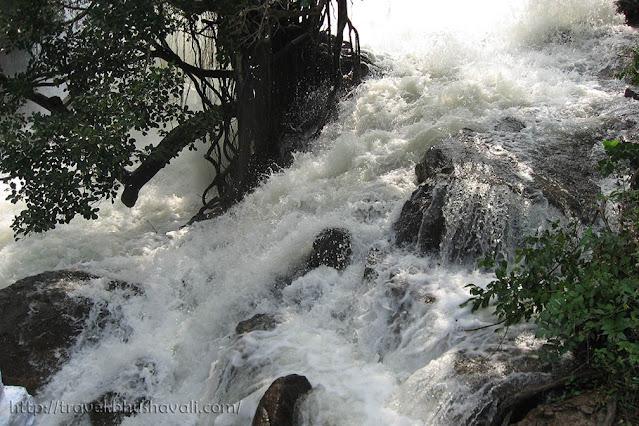 Vazhachal Forest