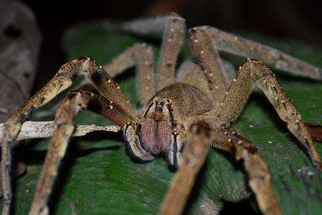 اسم عنكبوت في العالم