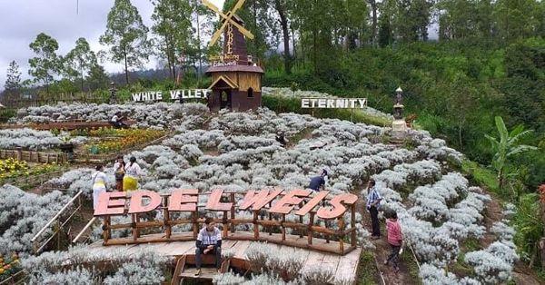 Taman Edelweis Destinasi Wisata Viral 2019