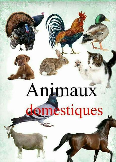 تعليم اسماء الحيوانات باللغة الفرنسية للاطفال والمبتدئين